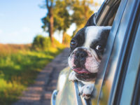 Viajando en coche con tu mascota