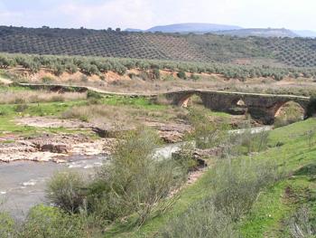puente-mocho